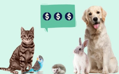 This is what it costs to own a pet. Forewarned is forearmed.